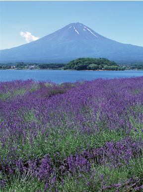 「日本富士山協会」設立趣意
